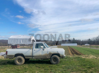 Old white work pick up truck on organic farm