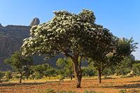 Baum in Blüte