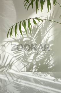 Natural branches of evergreen tropical palm plant with shadows on a wall.
