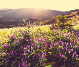 Meadow on sunset