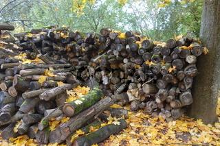 20201024_Brennholz, Firewood.jpg