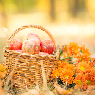 Basket with red apples in autumn