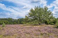 Naturschutzgebiet Buurserzand