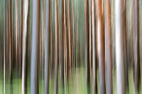 The blurred gate in the coniferous forest