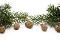 Acorns with fir branches