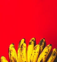 Many bananas on red background with copyspace top view. Bunch of bananas is lying on orange background