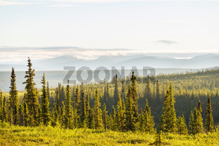 Polar tundra in Canada