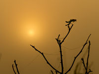 The last leaf on the branches of a bush against the background of the rising sun on an autumn morning