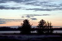 Abendstimmung mit Fichten an der Daenischen Nordseekueste / Dusk with spruce trees on the Danish North Sea coast / Syddanmark  -  Daenemark