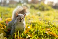 Beautiful close up of a happy squirrel on the grass