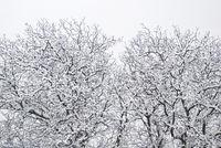 Schneefall 4