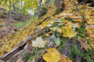 alter Baumstamm im Herbst