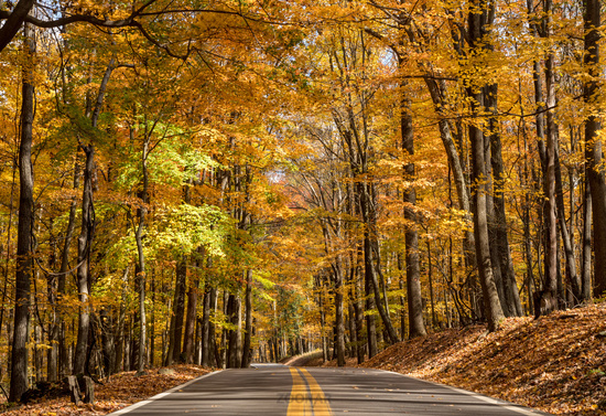 Road leading to Coopers Rock state park overlook in West Virginia with fall colors