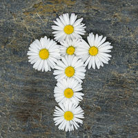 Christian cross made of yellow white daisy flowers on a gray slate plate