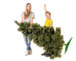 Сhildren carry a Christmas tree