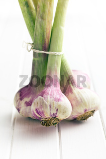 fresh garlic on table