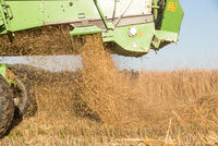 Combine and straw - close-up grain harvest