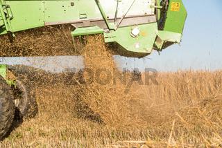 Mähdrescher und Stroh - Nahaufnahme Getreideernte