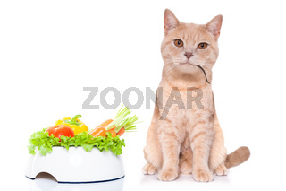 hungry cat with mouse in mouth and vegan bowl
