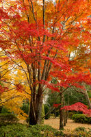 Beautiful deciduous trees in full colour in Autumn