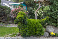 topiary garden bush cut into a dog shape