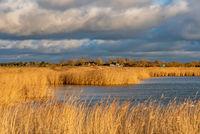 Reed fields