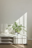 Modern interior place with stylish desk for TV with green houseplant.