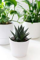 House plants in white ceramic and bamboo cashpo