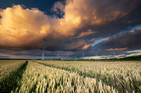 dramatic shower cloud at sunset over wheat field