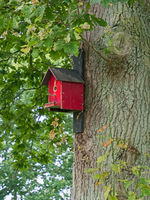 Wooden red nest box at the trunk of an oak tree