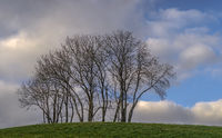 Group of trees in December