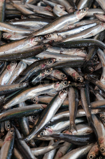 Fresh anchovies fish on ice close up