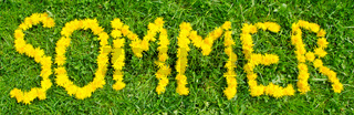 The word summer (in German caption 'Sommer') written with dandelion flowers on green meadow
