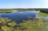 Aerial photo panorama of forest boggy lake in the Karakansky pine forest near the shore of the Ob reservoir.