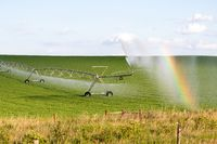 Pivot running in field with beauful rainbow on sunny day