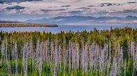 lake yellowstone in yellowstone national park in wyoming