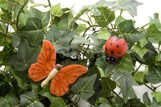 Schmetterling und Käfer mit Efeupflanze