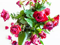 bouquet of withered red rose flowers on pale table
