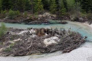 Wildflusslandschaft Obere Isar, Bayern