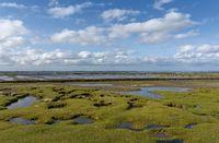 Salt Marsh,North Sea,North Frisia,Germany