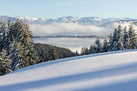 Amazing View from Snow Mountain with Forest to snowy Mountain Range above foggy cloud layer. Sea of clouds. Hauchenberg near Diepolz in Allgau, Bavaria, Germany.