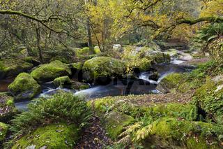 Flusstal Gouet im Herbst Saint Brieuc Bretagne