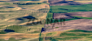 magical wheat farm fields in palouse washington