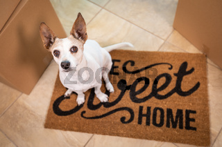 Cute Dog Sitting on Home Sweet Home Welcome Mat on Floor Near Boxes