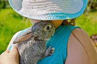 Rabbit gray on hands of girl in hat