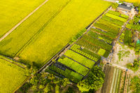 aerial view of farm
