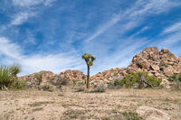 Rugged rocks and Joshua tree plant at Joshua Tree National Park in California