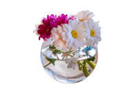 Bouquet of camomile gerbera white and pink flowers in glass vase isolated on white background. Shallow depth. Soft focus toned image. Floral springtime.