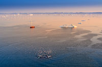 Greenland Ilulissat sea with 2 whale keporkak and red sailing boat