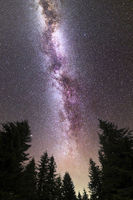 Purple Milky way falling stars pine trees silhouette